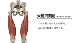 ルーマニアンデッドリフト ヒップアップ 太もも太くならない 大腿四頭筋