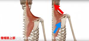 筋バランス 肩凝り 肩コリ 肩こり 改善 方法