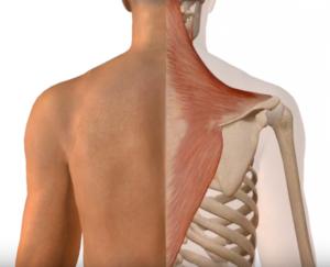 肩こり 肩凝り 肩コリ 改善 方法