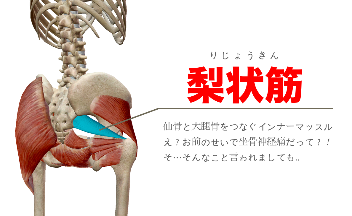 梨状筋 筋膜リリース ストレッチ