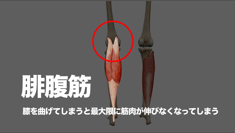 腓腹筋 足首 柔軟性