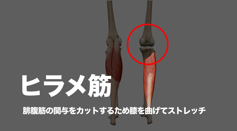ヒラメ筋 腓腹筋 足首 柔軟性