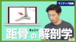 距骨の解剖学 足首の構造