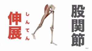 大臀筋の役割