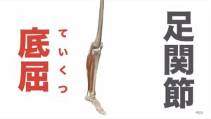 下腿三頭筋の役割