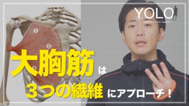 大胸筋の3つの繊維